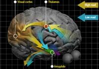 Emotions and the Brain: Fear
