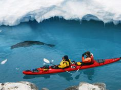 Sea Kayaking in Antarctica with a pinniped. I wonder if it's a leopard seal?!