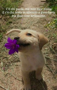 Animals have their own funny side, and here in funny animal picdump of the day - 27 you will find 29 funny animal pictures. Super Cute Puppies, Cute Baby Dogs, Cute Little Puppies, Cute Dogs And Puppies, Cute Little Animals, Cute Funny Animals, Doggies, Puppies With Babies, Baby Animals Pictures