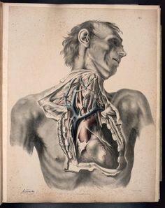 Anatomy of the arteries of the human body, Sir Richard Quain  Illustrations by: Joseph Maclise