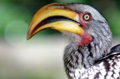 "At the ""Birds of Eden"" park in South Africa #birds #birdsofeden #southafrica"