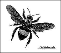 LB1437 Bee