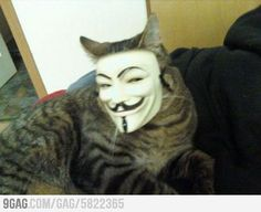 Why in the WORLD would someone put this mask on their cat??? omg. 1. that poor cat. 2. this is just EVIL. 3. this is just DISTURBING!!!