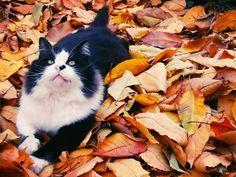 My Tuxedo cat!