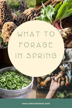 What to Forage in Spring - Nature Moms - What to Forage in Spring – There are many different medicinal and edible plants as well as fungi that arrive in spring for you to look for and enjoy with abandon. Healing Herbs, Medicinal Plants, Wild Mushrooms, Stuffed Mushrooms, Edible Wild Plants, Survival Food, Survival Kits, Survival Prepping, Wild Edibles