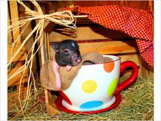 This seems like a good day for cute things in over-sized cups.