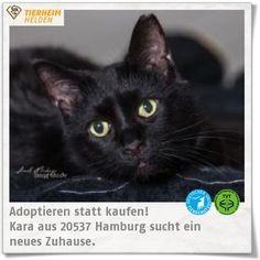 Die taube Kara sucht ebenso im Tierheim Hamburg ein Zuhause in einer ruhigen Gegend.  http://www.tierheimhelden.de/katze/tierheim-hamburg/ekh_schwarz/kara/9467-1/  Da Kara taub ist, aber nicht auf ihren Freigang verzichten möchte, sollte sie in einer unbefangenen Gegend wohnen. Sie ist Hunde und Kinder gewöhnt. Andere Katzen ist sie gewohnt. Sie ist super verschmust und anhänglich.