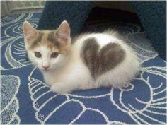 furry love :x