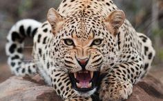 Canlıların ilginç yaşamları: Mutlaka izlemeniz gereken 5 hayvan belgeseli - Canlı TV izle http://www.canlitv.biz/canlilarin-ilginc-yasamlari-mutlaka-iizlemeniz-gereken-5-hayvan-belgeseli/