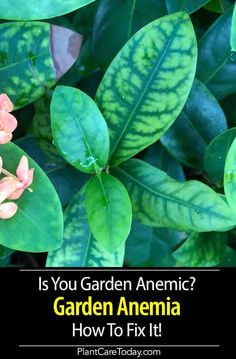 House Plant Maintenance Tips Garden Anemia Occurs When Minor Or Trace Elements, Needed Only In Minute Quantities, Are Not Available To The Plant. Small Space Gardening, Small Gardens, Front Gardens, Outdoor Gardens, Growing Herbs, Growing Vegetables, Container Plants, Container Gardening, Plant Containers