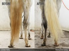 ON HORSE NATION >> Have you taken the Ketchup Tail Challenge?