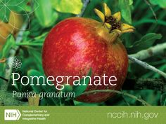 Researchers have studied all parts of the pomegranate for their potential health benefits, including the fruit, seed, seed oil, tannin-rich peel, root, leaf, and flower. Read about what they've learned here: http://1.usa.gov/1H4NH9a