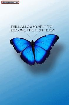 Butterfly Quote Animations