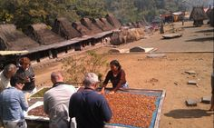 bena Traditional village of ngada , located in bajawa subdistrict ngada regengy ,one of the local primitive house as the inharitance by the ancestors of ngada people and as the dwelt of new generation and still maintained culture and their ethnic .