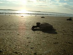 Costa Rica...we were there when the turtles hatched.  Held an hour old turtle in my hand.  Priceless
