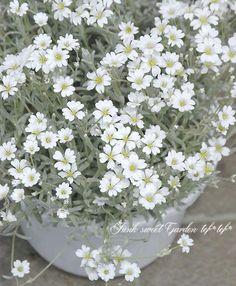 Green Flowers, White Flowers, Flower Pots, Greenery, Watercolor, Garden, Floral, Beautiful, Flower Vases
