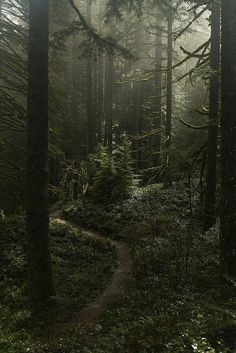 Misty forest at Silverton falls area, Oregon! Misty forest at Silverton falls area, Oregon! Misty Forest, Forest Path, Dark Forest, Forest Trail, Conifer Forest, Forest Color, Forest Fairy, Forest Photography, Camping Photography
