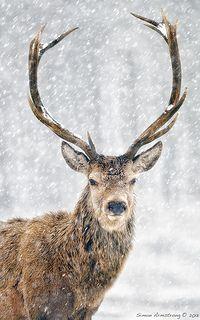 Flickr Search: deer | Flickr - Photo Sharing!