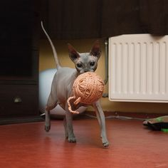 hahahaha hey, a cat with a ball of yarn! the stories have to come from somewhere...