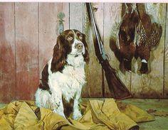 English Spaniel Hunting Dog