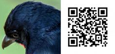 Scan the QR Code to view the correct answer Birds 2, Bird Watching, Board