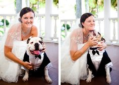 I want my bulldog Domer to be my ringbearer on my wedding day, so he's going to have to wear a tux!!
