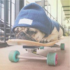 ? #wallpaper, pug - #tumblr wallpaper