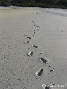 Whitsunday Beach, Australia