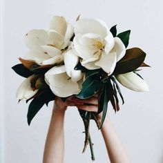 magnolia wedding bouquet wedding flowers - Page 6 of 101 - Wedding Flowers & Bouquet Ideas Ikebana, Magnolia Bouquet, Magnolia Flower, Magnolia Wedding Bouquets, Bridal Bouquets, Sweet Magnolia, Magnolia Leaves, Arte Floral, Dahlia