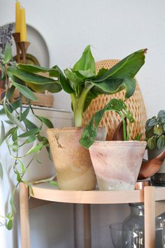 Shop the Look: Handmade plant pots from Iran Balcony Plants, Potted Plants, Garden Plants, Indoor Plants, Plant Pots, Beautiful Gardens, Beautiful Flowers, Gardening Photography, House Plant Care