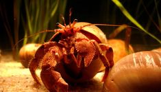 hermit crab image by alwayspp from Fotolia.com
