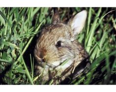 Homemade Ideas to Keep Rabbits out of Gardens | eHow