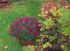 Tout ce qu'il faut planter en octobre au jardin ou sur balcon - F. Marre - Rustica