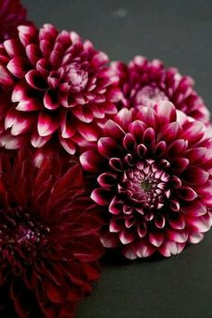 Deep red dahlias with white/cafe au lait and some light roses for me idea
