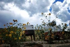 wash tubs and sunflowers