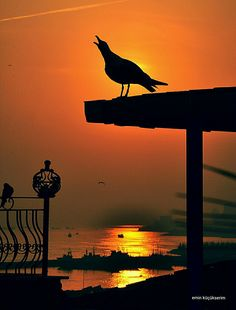 Sultanahmet İstanbul  Gün batımı Sunrise, Celestial, Istanbul, Outdoor, Image, Outdoors, Sunrises, Outdoor Games, Sunrise Photography