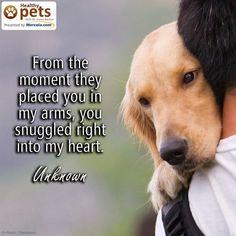 Dog quote #dogtrain #dogtraininganxiety