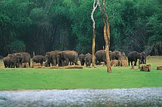 Idukki Wildlife Sanctuary is one of the well-known #tourist #attractions in Idukki District of Kerala. Idukki wildlife Sanctuary has numerous tropical and deciduous #forests, grasslands, #beautiful lakes and rivers which give remarkable experience to the tourists. #keraladiaries #wildlife #wildlifetours #adventure #fun