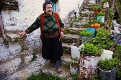 Greens and Herbal Teas    A woman pauses by potted herbs on Ikaría. Researchers have found that herbal teas and more than a hundred varieties of antioxidant-rich wild greens play a large role in the Ikarían diet. Some of the herbal teas commonly consumed by Ikaríans act as mild diuretics that could lower blood pressure.