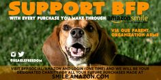 Support the Beagle Freedom Project by making Amazon purchases via BFP.social/amazon