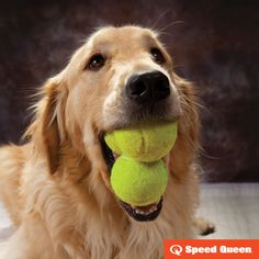Tennis balls aren't just for dogs. Toss three balls in the dryer with your freshly laundered pillows to keep them fluffy.