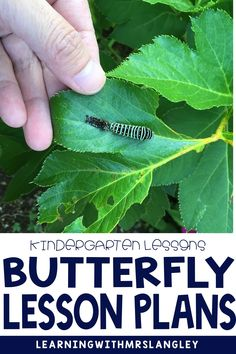 Distance Learning Butterfly Lesson Plans and Activities for Kindergarten Stages Of A Butterfly, Types Of Butterflies, Butterfly Life Cycle, Kindergarten Activities, Preschool, Vocabulary Cards, Hands On Activities, Science Lessons, Life Cycles