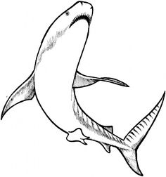Realistic Bull Shark Coloring page Day Care Pinterest Sharks