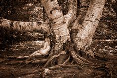 White Birch – Betula papyrifera - Treegirl: Intimacy with Nature
