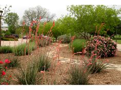 Texas Smartscape Image Gallery - some good ideas for San Antonio drought yards