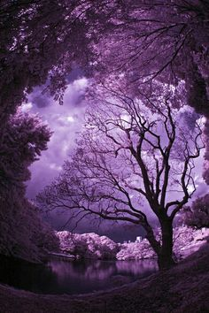 Mother Nature is the best artist. Simply beautiful- I'm in purple heaven~ Purple Sky, Purple Love, Shades Of Purple, Purple Things, Purple Trees, Purple Stuff, Plum Purple, Magenta, Lilac