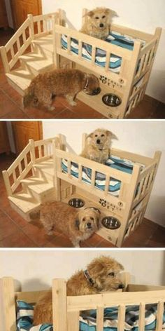 Your pet will love this