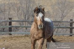 Wild Horses: Adobe Town Wild Families Reunited at Black Hills Wild Horse Sanctuary