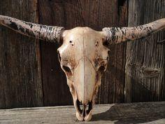 Longhorn Steer Faux Long Horn Taxidermy Texas Cow Skull Animal Wall Mount Decor 47 99 Via Etsy
