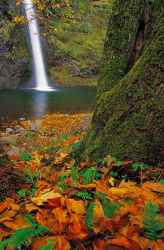 Gatlinburg. Come spend a day In The Smokies. The foliage will leave you breathless.